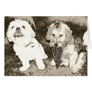 Cute dogs notecard -Shitzu and Yorkipoo