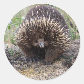 Cute Echidna from Australia Classic Round Sticker