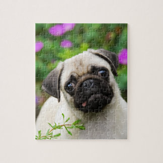 Cute fawn pug puppy puzzles