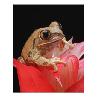 Cute Frog on Red Flower Poster