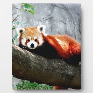 cute funny animal red panda plaque