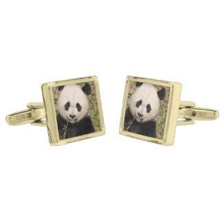 Cute Giant Panda Bear Gold Finish Cufflinks