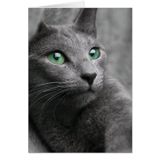 Cute grey cat card