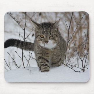Cute grey cat in snow mousepads