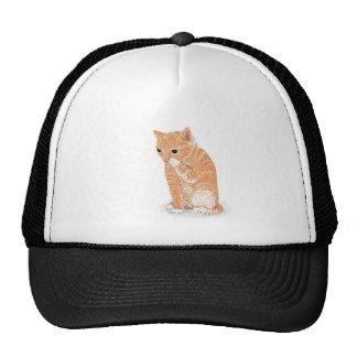 Cute Kitten  Products Cap