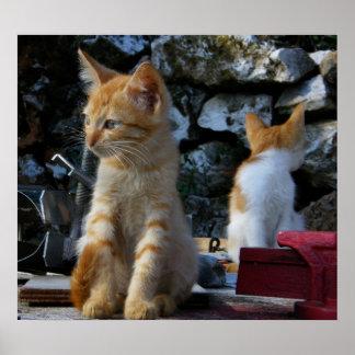 Cute kittens print