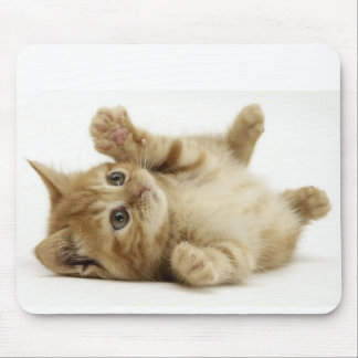 cute kitty mouse pad