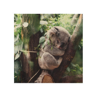 Cute Koala Bear relaxing in a Tree Wood Wall Decor