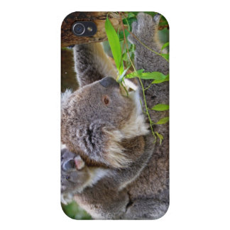 Cute Koalas iPhone 4 Covers