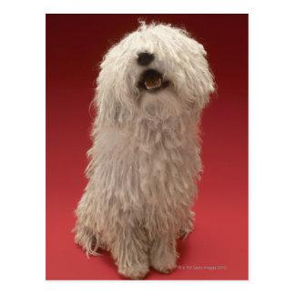 Cute Komondor Dog Postcard