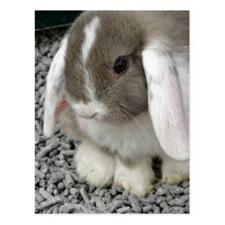 cute lop bunny postcard
