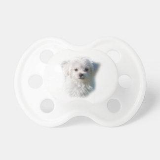 Cute Maltese Dog Dummy