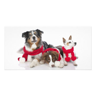 Cute Merry Christmas Dogs Card