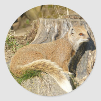 Cute Mongoose Classic Round Sticker