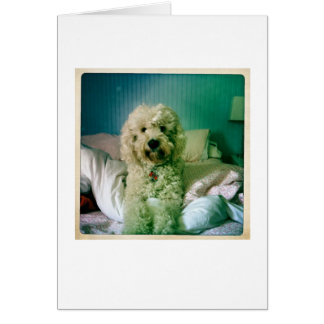 Cute Notecard Goldendoodle