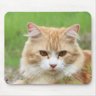 Cute orange cat lying in grass mouse pads