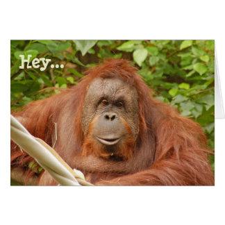 Orangutan 50th Birthday Funny Birthday Greetin...
