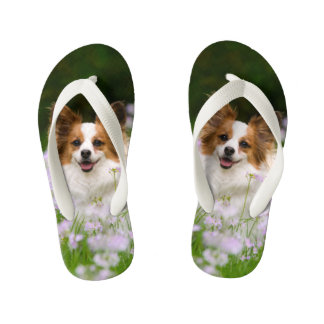 Cute Papillon Spaniel Head Photo for Dog Lovers -- Kid's Jandals