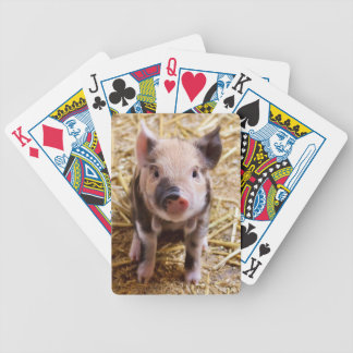 Cute Pic of a baby Pig Poker Deck