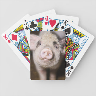 Cute piglet bicycle playing cards