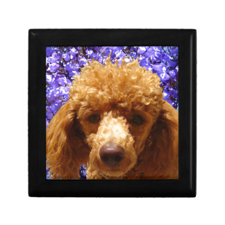 Cute Poodle Gift Box