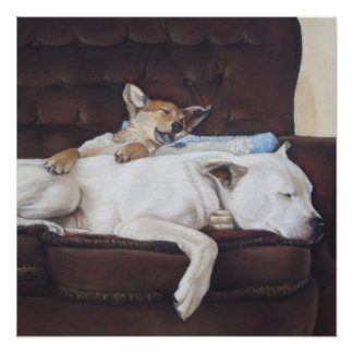 Cute puppy and white dog realist animal art Poster