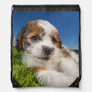Cute puppy dog (Shitzu) Drawstring Bag