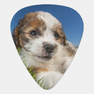 Cute puppy dog (Shitzu) Guitar Pick