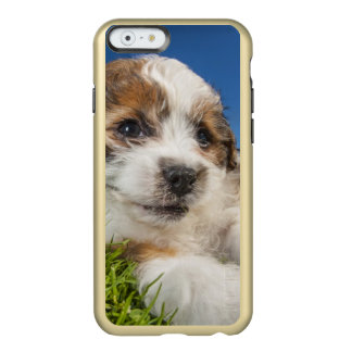 Cute puppy dog (Shitzu) Incipio Feather® Shine iPhone 6 Case