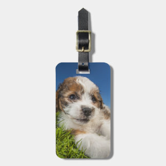 Cute puppy dog (Shitzu) Luggage Tag