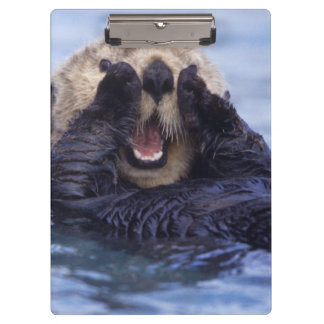 Cute Sea Otter | Alaska, USA Clipboard