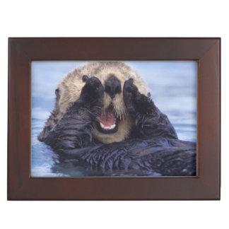 Cute Sea Otter   Alaska, USA Memory Box