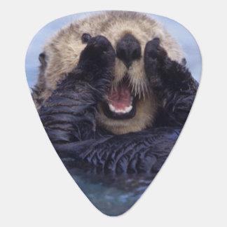 Cute Sea Otter | Alaska, USA Plectrum