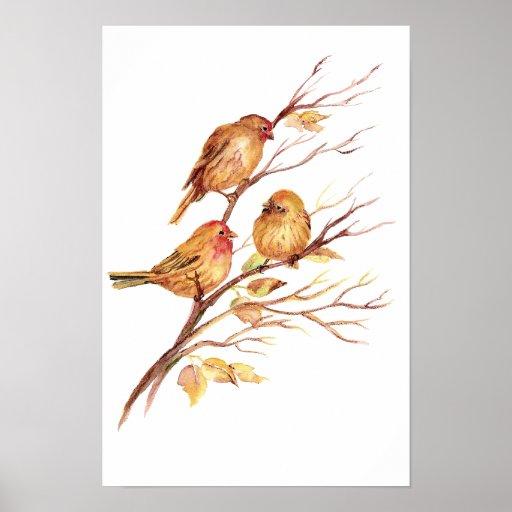 Cute Song Sparrow, Bird, Garden, Animal Nature Posters
