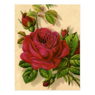cute vintage roses postcard