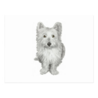 Cute Westie Dog Postcard