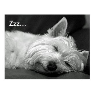 Cute Westie West Highland Terrier Dog Postcard