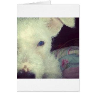 Cute white dog card