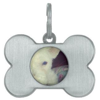 Cute white dog pet ID tags
