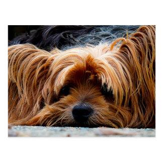 Cute Yorkshire Terrier Dog Postcard