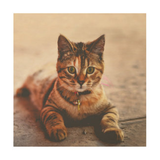 Cute Young Tabby Cat Kitten Kitty Pet Wood Wall Art