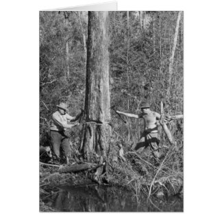 Cypress Lumbermen in the Florida Everglades, 1952 Card