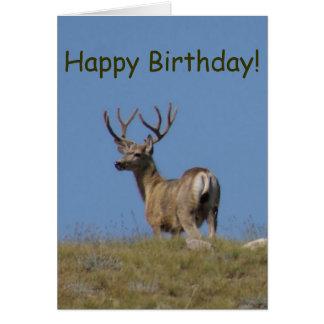 D0009a Mule Deer Buck in Velvet Card