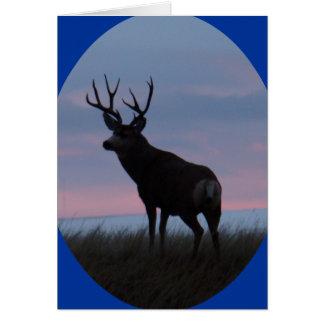 D0022 Mule Deer Buck Sunrise Buck Card