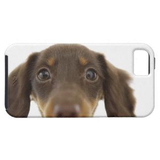 Dackel-Hund (Braun) 2 Tough iPhone 5 Case