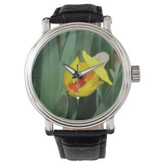 Daffodil Bloom Watch