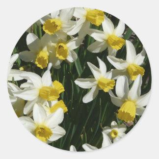 daffodil classic round sticker
