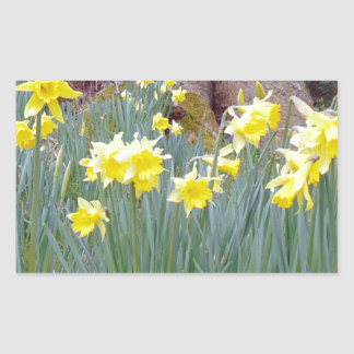daffodil wood.jpg rectangular sticker
