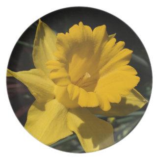 Daffodil Yellow Flower Plate