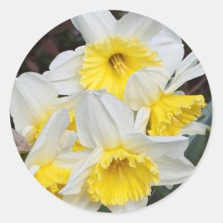 Daffodils Classic Round Sticker